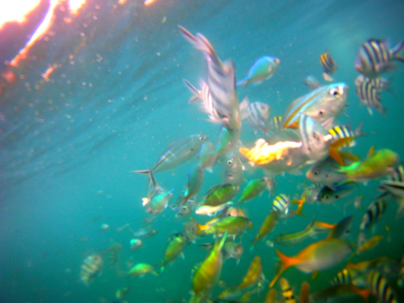 Snorkelling with Trigger fish