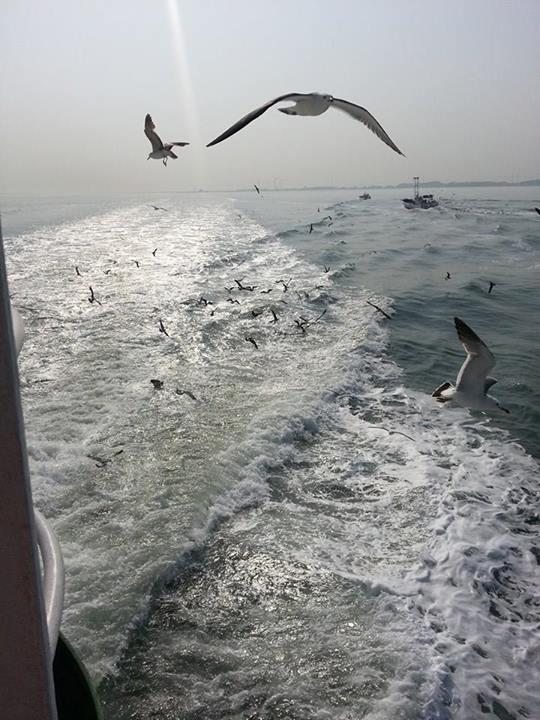 seagulls ferry 1