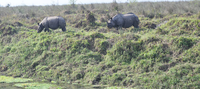1-Rare-animal-one-horned-rhino-in-Chitwan-National-Park