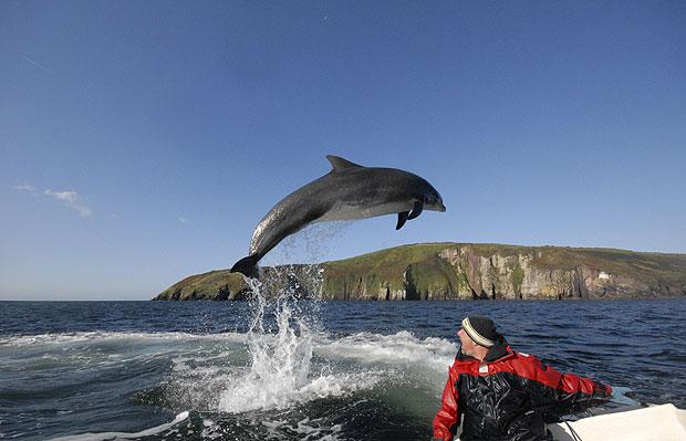 fungi-the-dolphin
