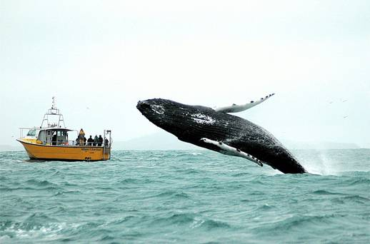 whale-watching-west-cork