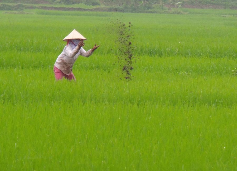 vietnamese-rice-farmer
