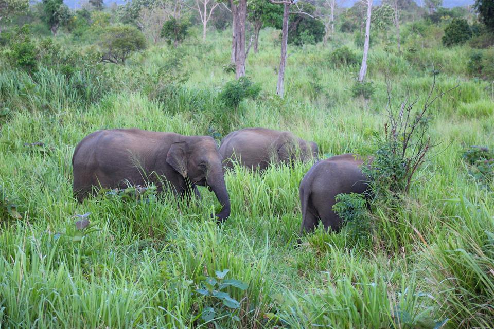 sigiriya elephants