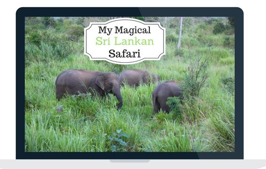 My Magical Sri Lankan Safari – On The Search For Wild Elephants