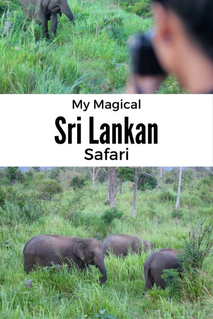 Sri Lankan Elephant Safari