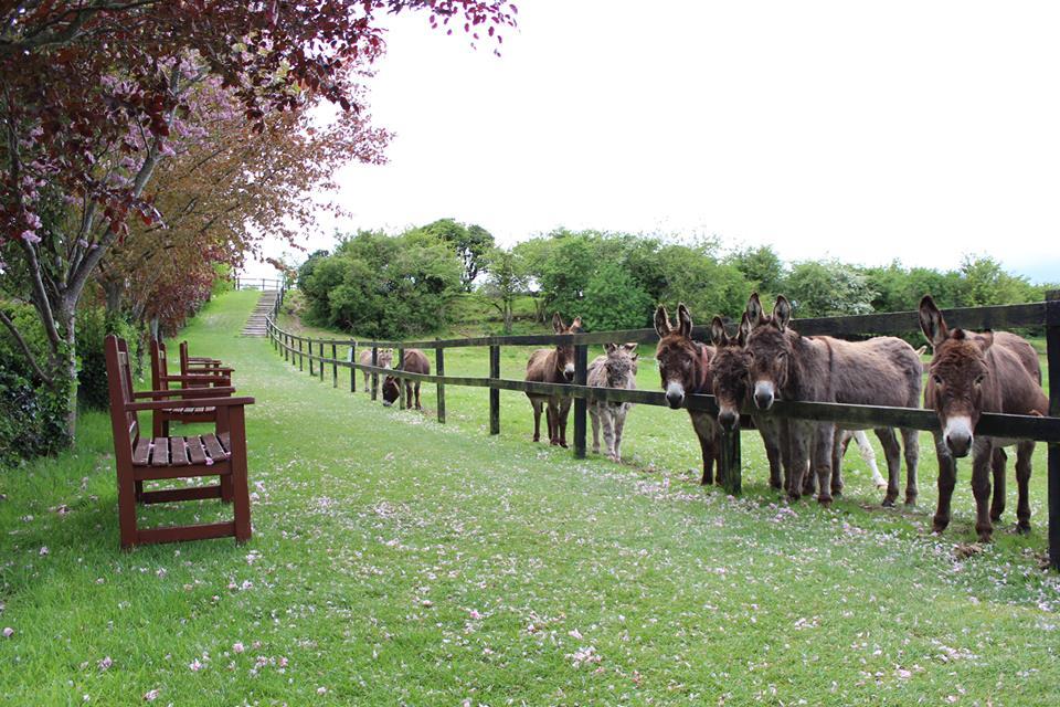 donkeys-cork