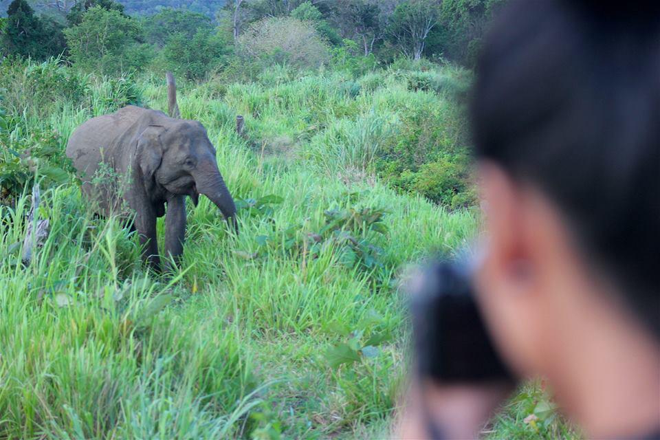 srilankan safari yala