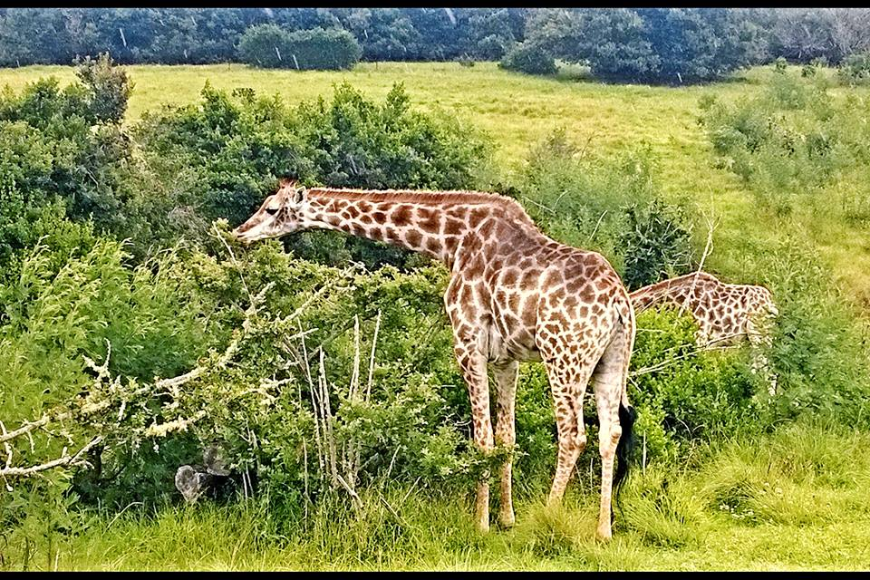 safari-south-africa