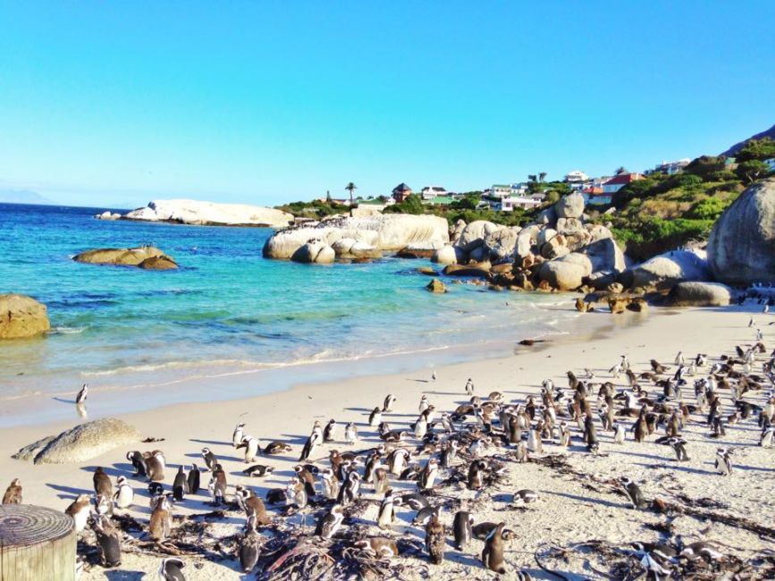 penguins-simonstown
