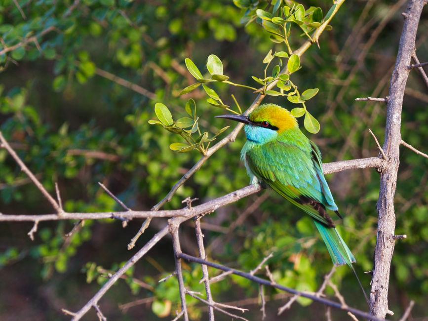 bird watching safari sri lanka