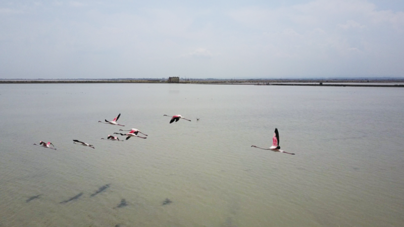 flying flamingos puglia