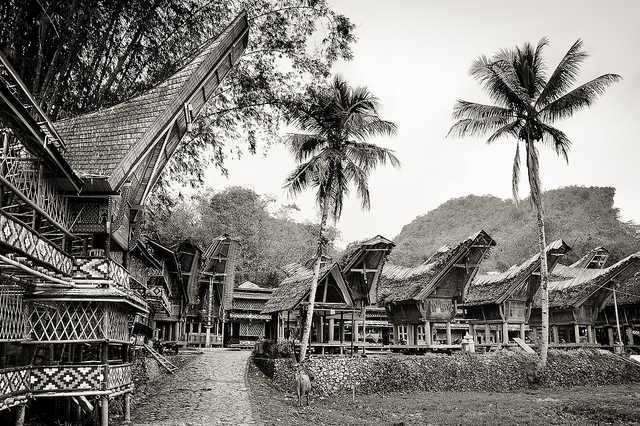 traditional toraja houses