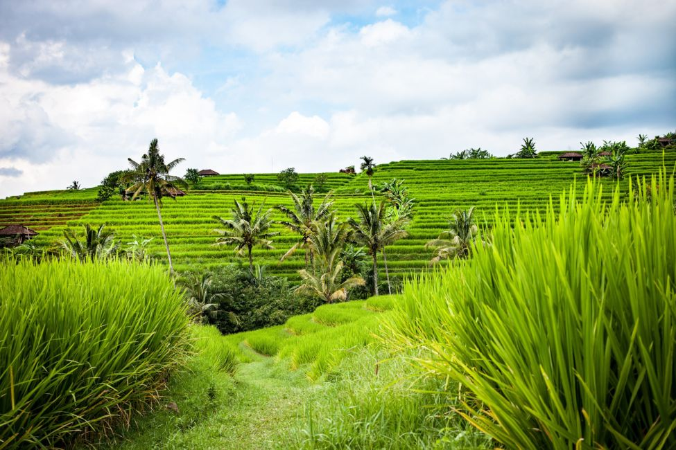 things to do in bali for free