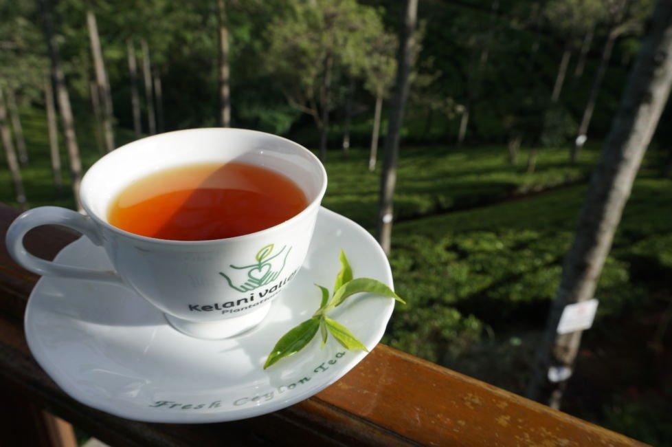 pedro tea estate tea