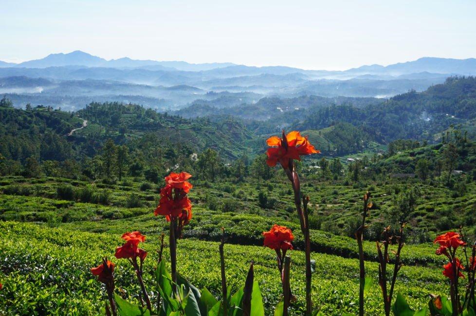 nuwara eliya views