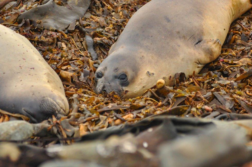 sea lion island falklands