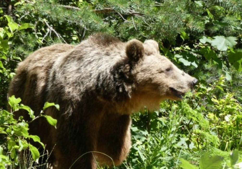 dancing bear park bansko ski resort