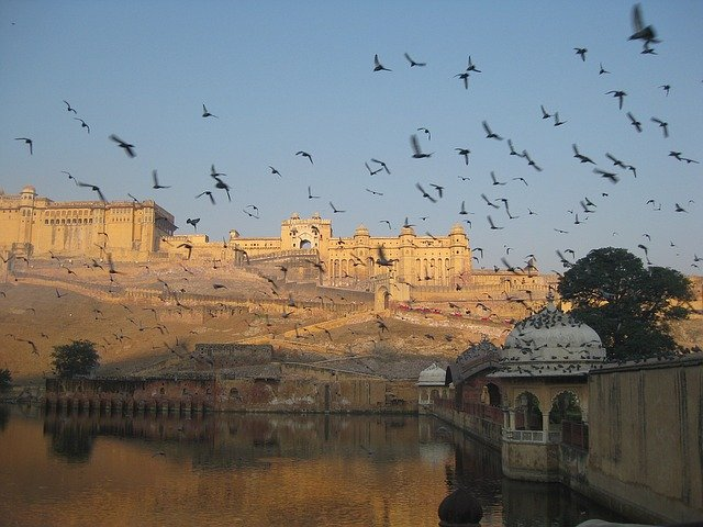 amber fort in jaipur with birds