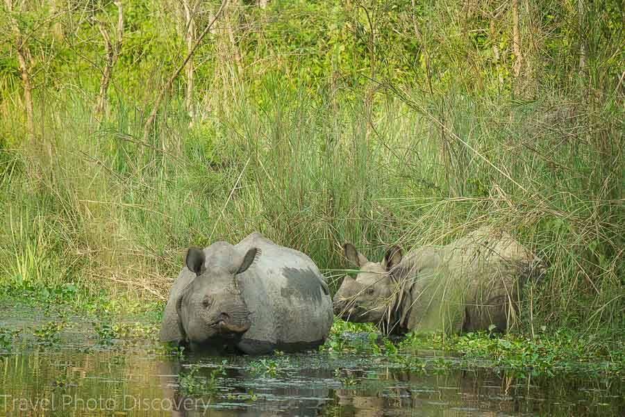 chitwan national park rhino