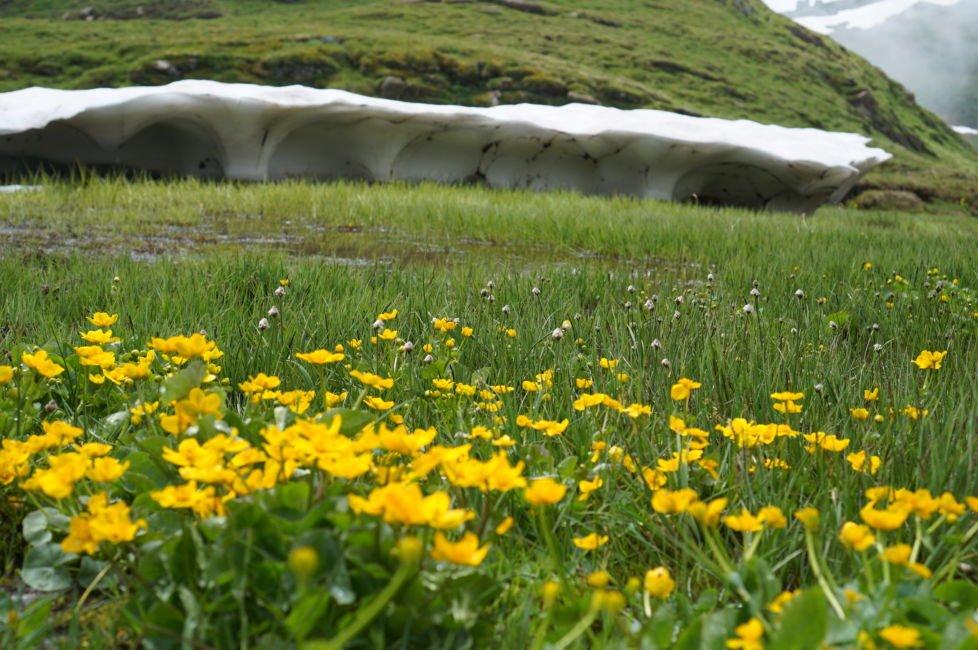 snow field first grindelwald
