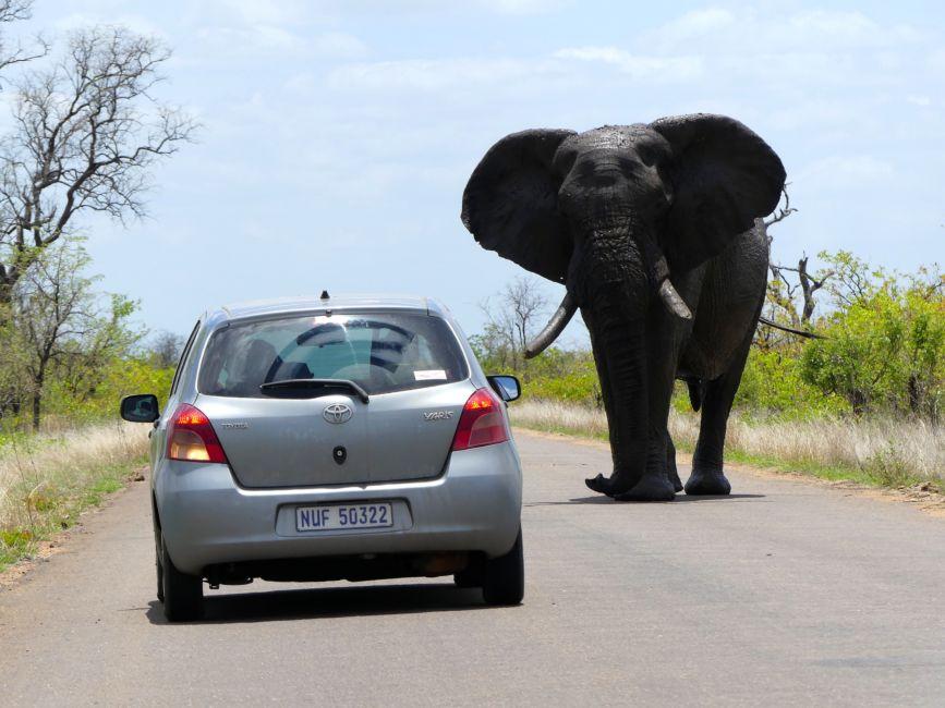 elephant car kruger national park