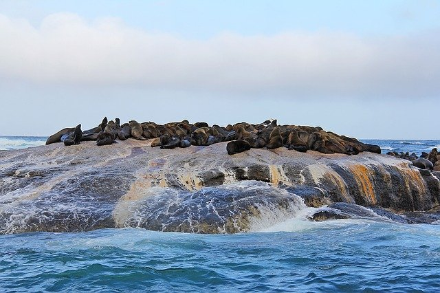seal island South Africa