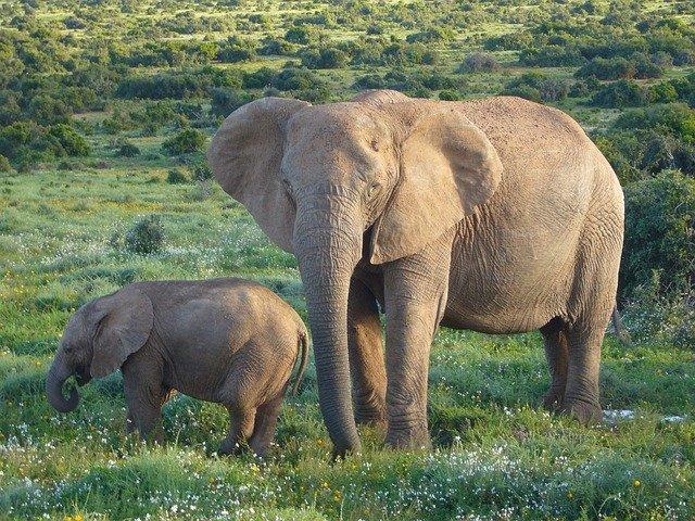 wildlife holidays africa