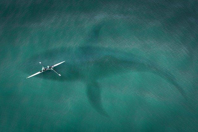 blue whale safari