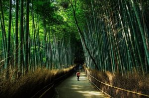 day trips from kyoto