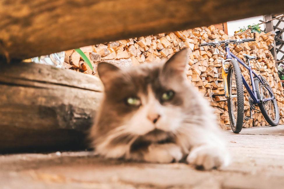 mezzano romantica cat and log piles