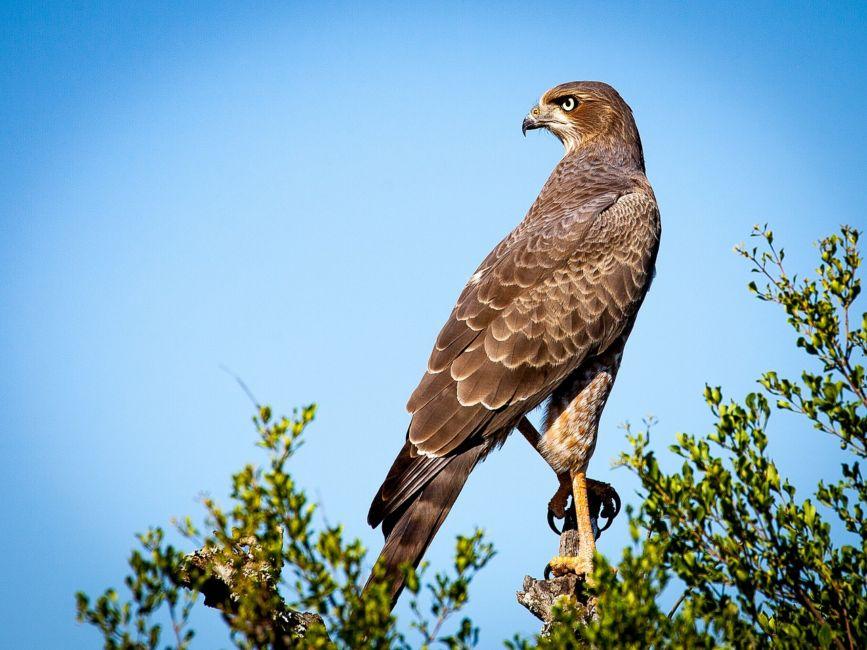 bird watching bay of fundy