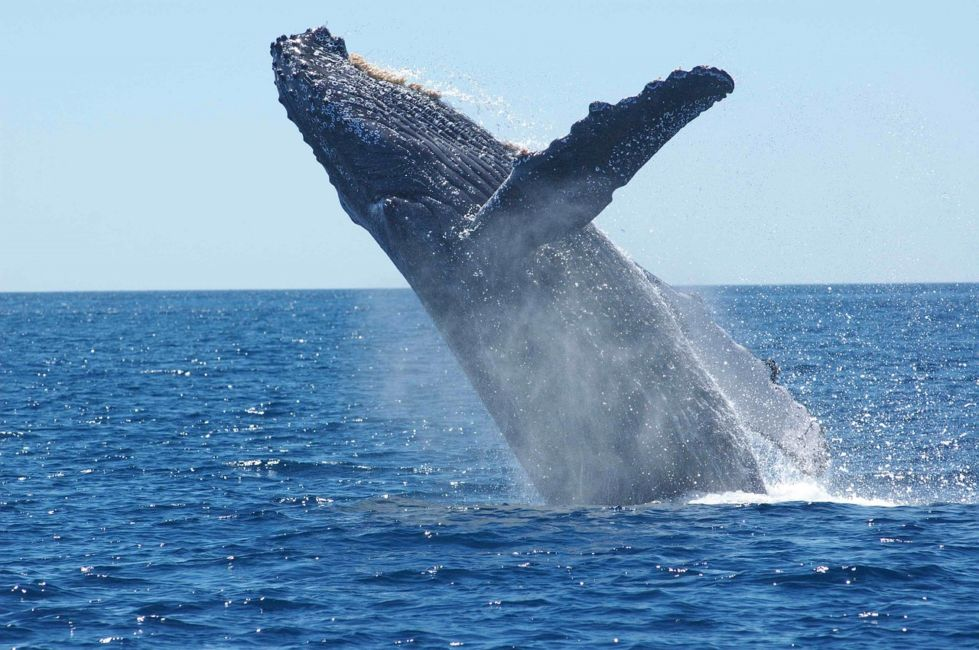 fundy bay whales