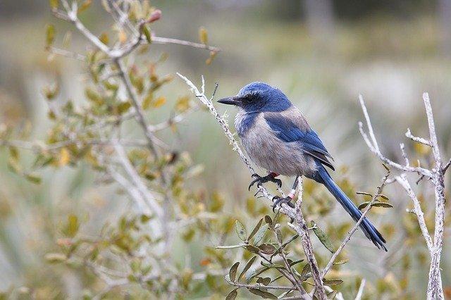 birds in Ocala forest