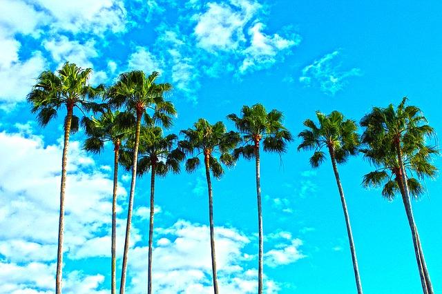 palm beach road trip Florida